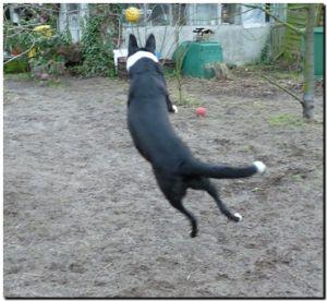 fliegender_hund