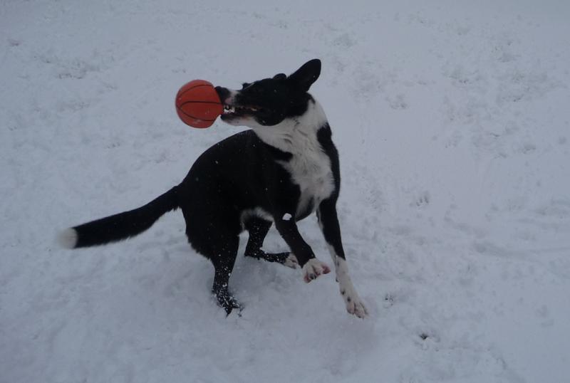 Schnauzball