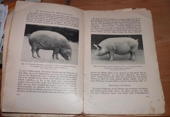 Schweinisches