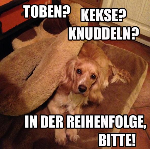 Schmusen_Tobren_Knuddeln