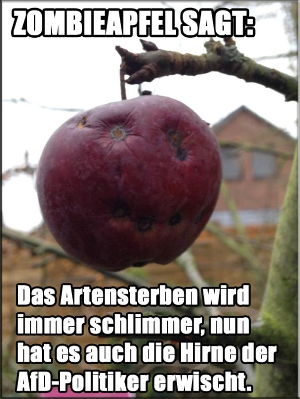 AfD_Hirne