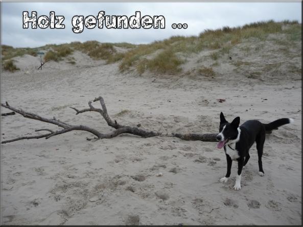 holz_gefunden