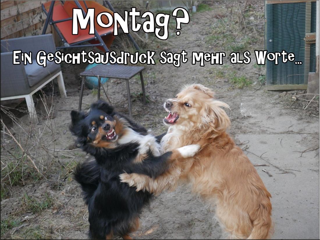 montag-kopie2
